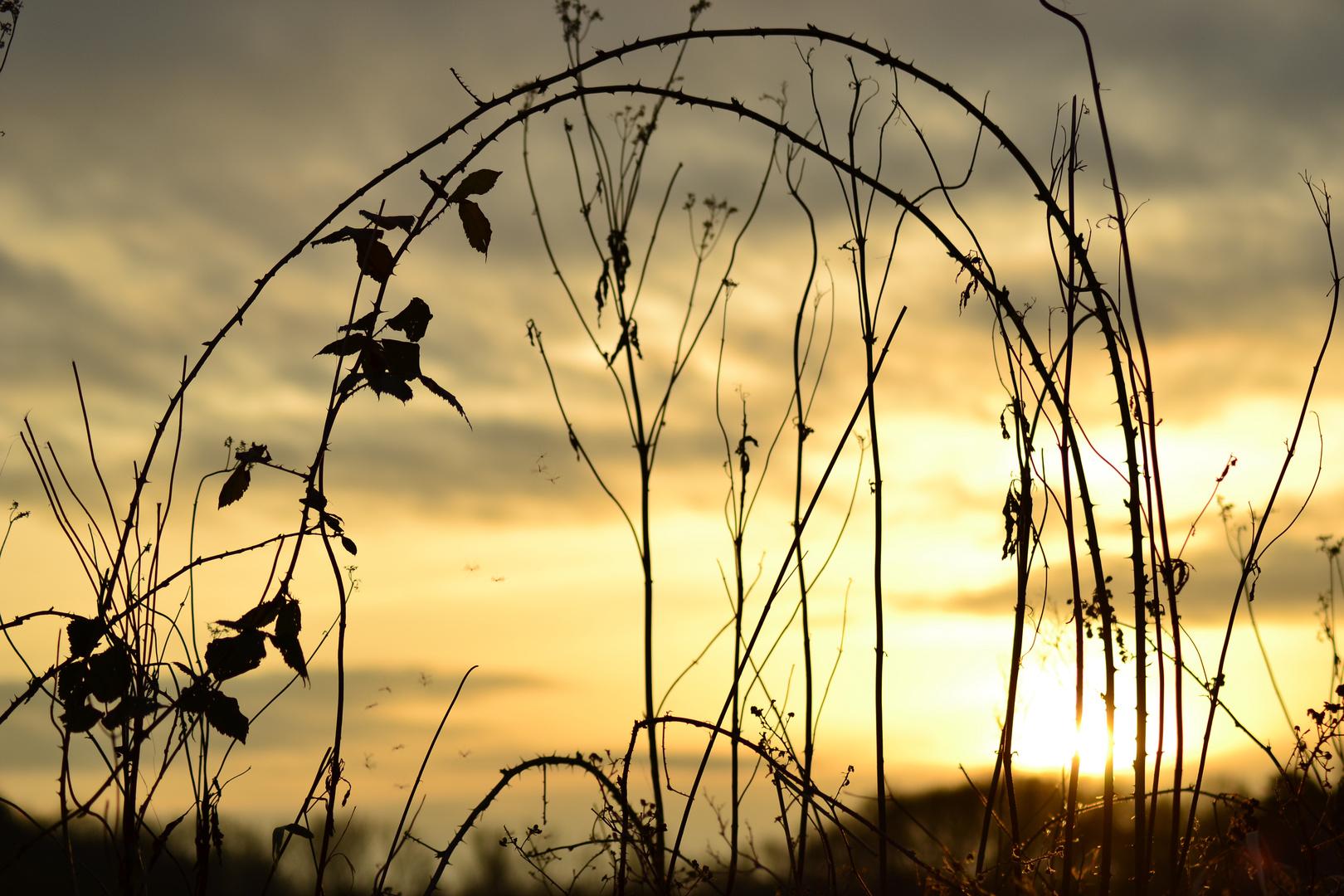 Mücken im Sonnenuntergang