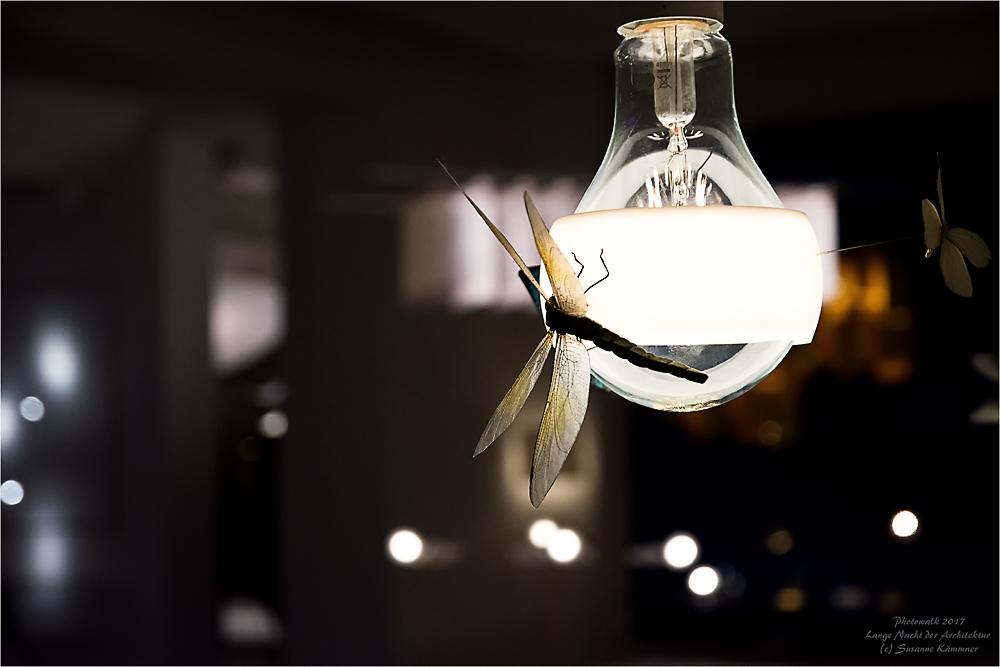 Mucken Licht Eine Unendliche Geschichte Foto Bild
