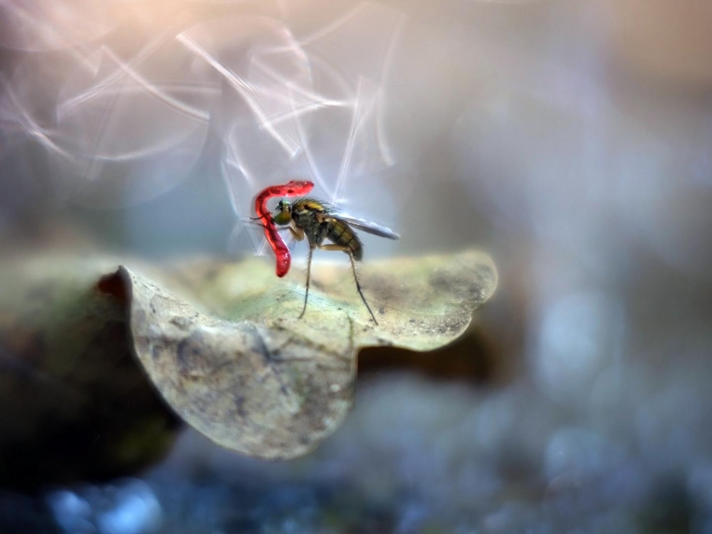 Mückenlarve zum Mittag