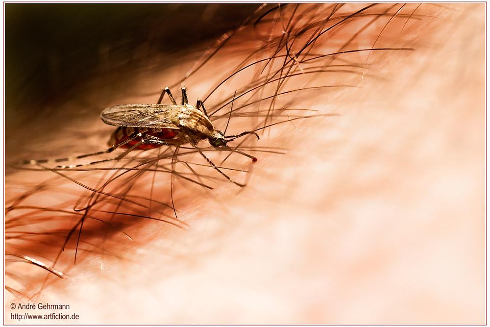 Mückenstiche...