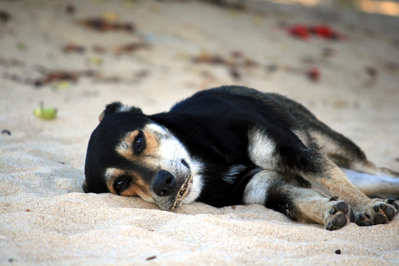 Müde.....