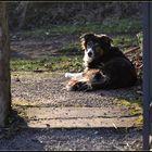 Müde alte Hundelady