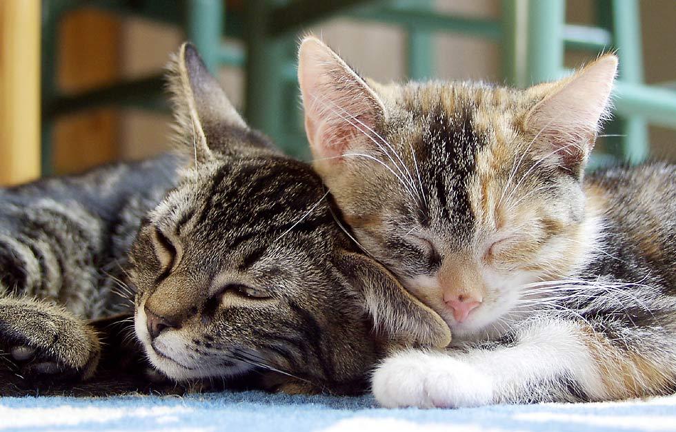 Müde Katzengeschwister
