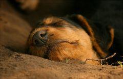 Müde vom Buddeln