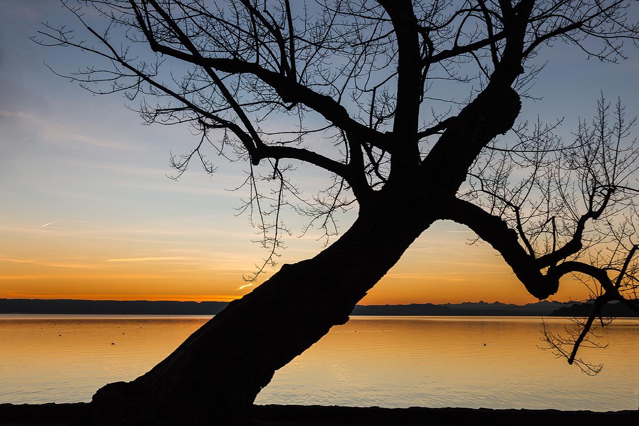 Müder alter Baum