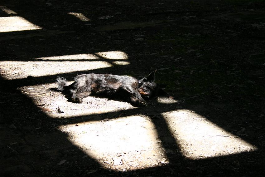 Müder Schrottrobberhund