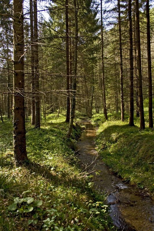 Mühlbachgraben