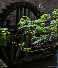 Mühlen, die am Wasser träumen...##1438#