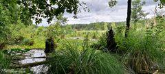 Mühlensee - Müritz Nationalpark