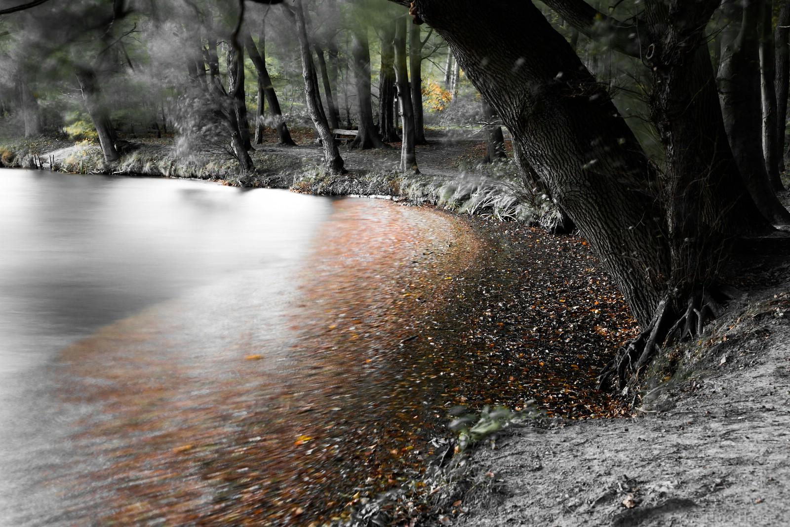 Mühlenteich im Herbstlaub