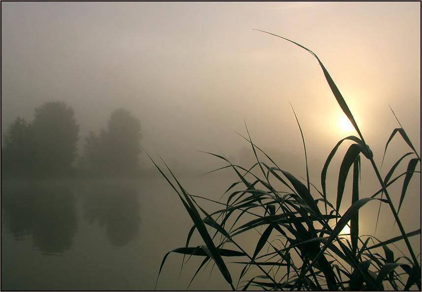 Mühsam kämpft sich die Sonne durch den Nebel
