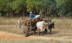Mühsame Landarbeit auf Kuba