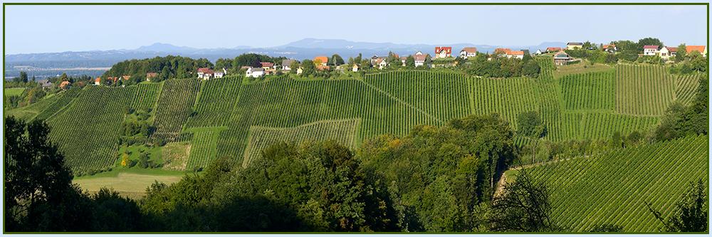 Mühsamer Weinbau in der Südsteiermark