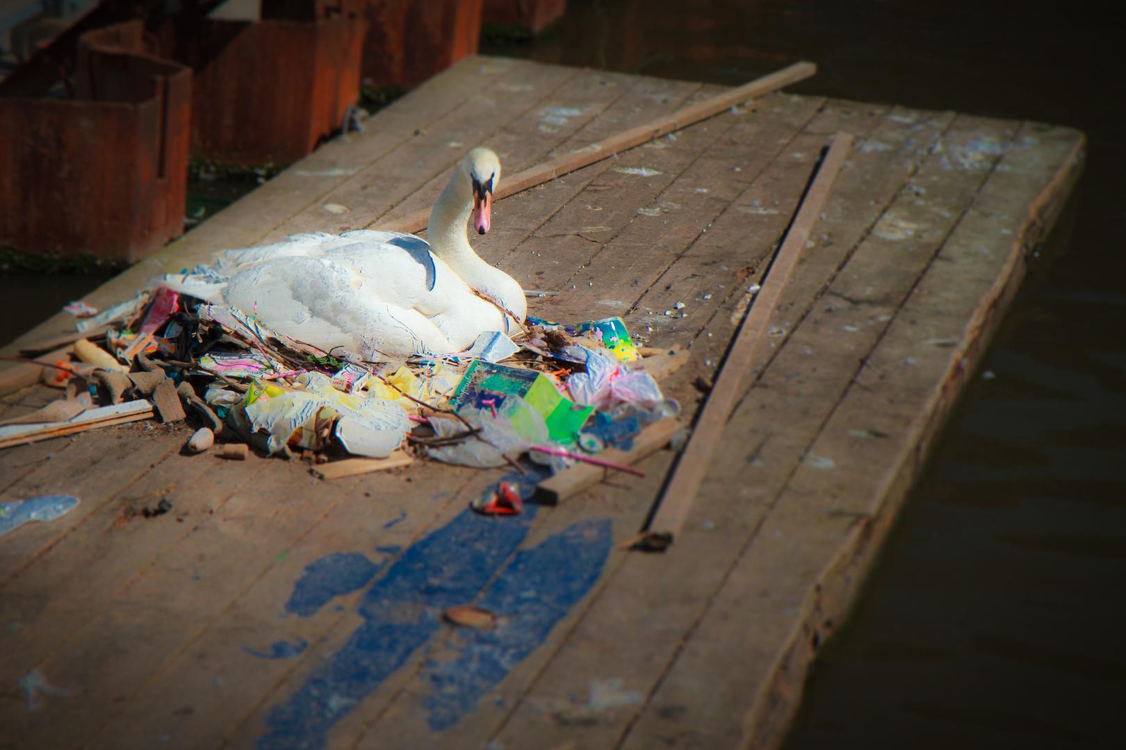 Müllschwan