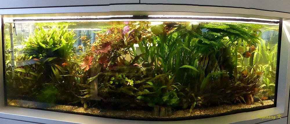 Müllverbrennungsanlage Flingern - Aquarium am Ausgang der Anlage