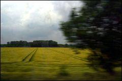münsterland #3.1