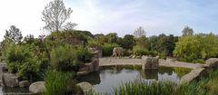 Münsters großer Elefantenpark...eine kleine Werbung dafür..