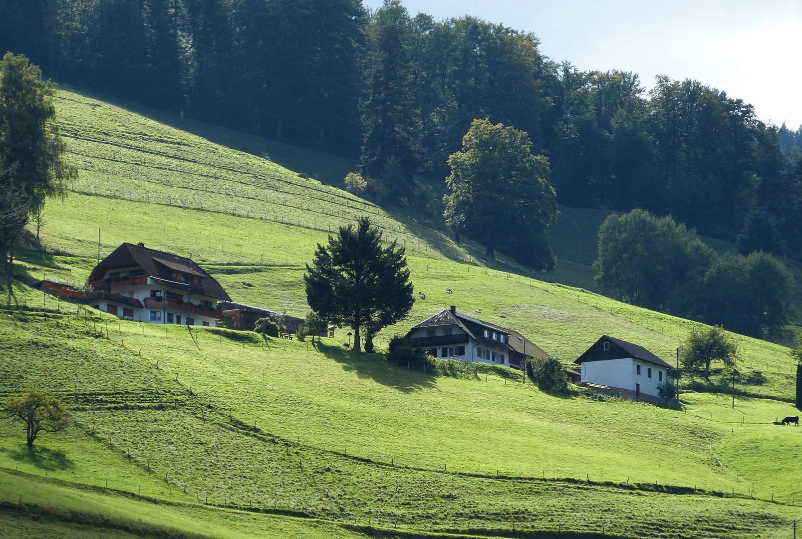 Münstertal /Schwarzwald