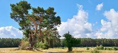 Müritz - Nationalpark