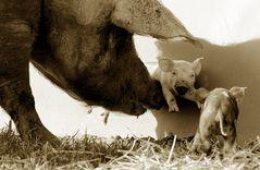 Mütterliche Sorgfalt...