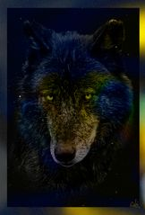 Multicolor Wolf