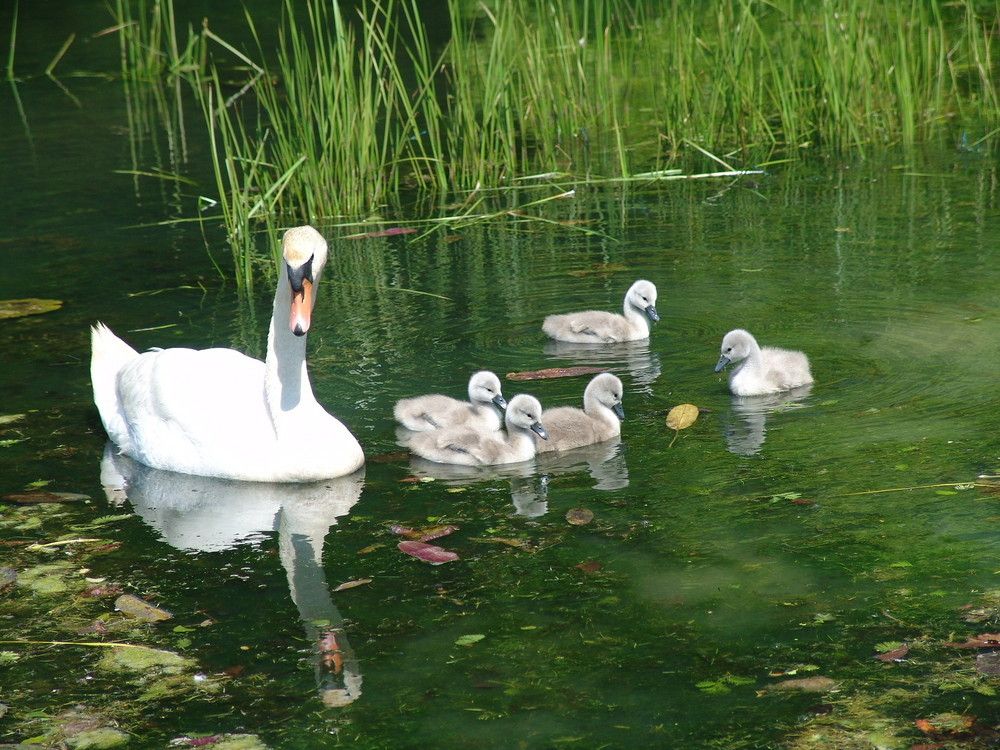 Mum and her New Signets