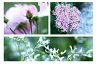 Mum´s Garden