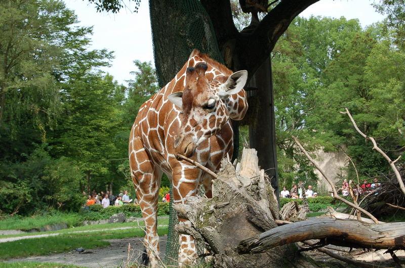 Munchen Zoo