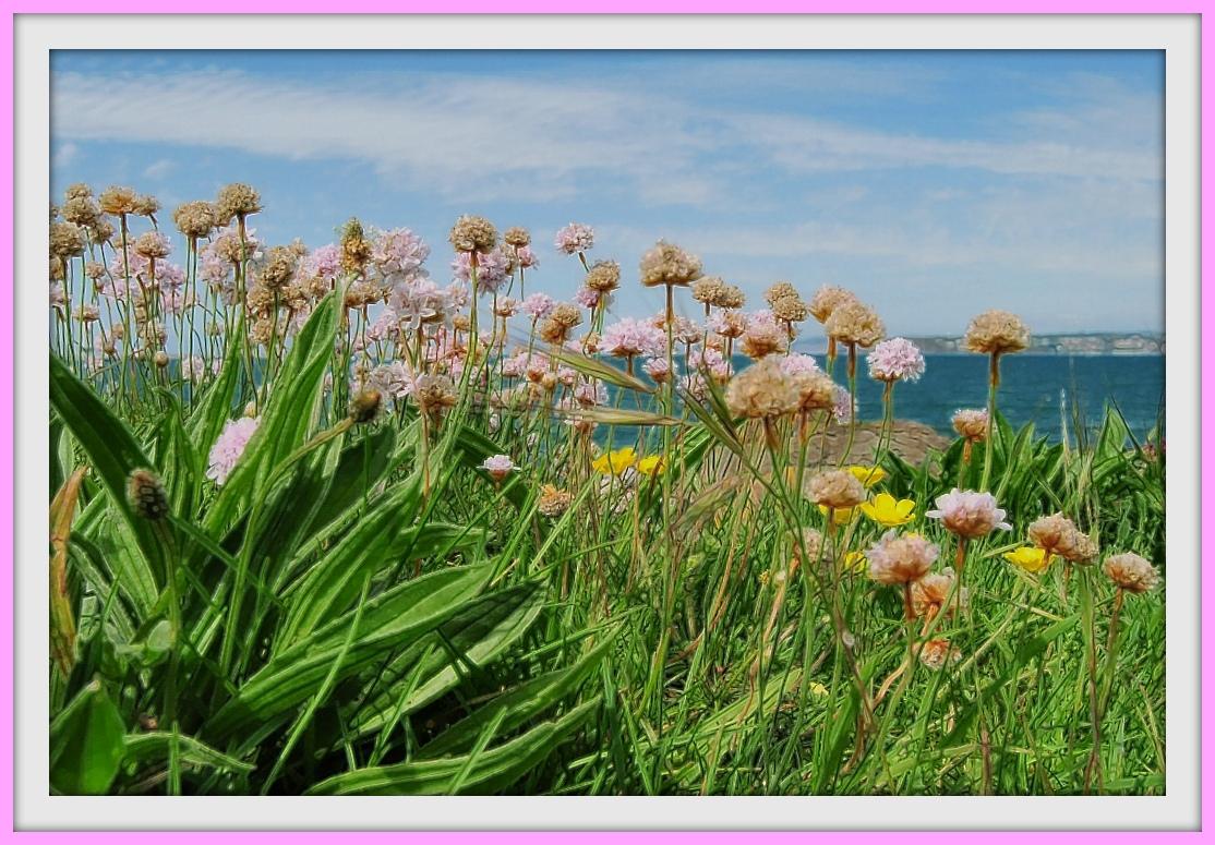 mundo floral