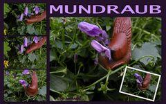 """""""Mundraub"""" ..."""