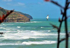 Muriwai Beach mit Tölpel