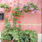 Muro di Burano La grazia ...in un colore ! Burano's wall .The grace in a colour !