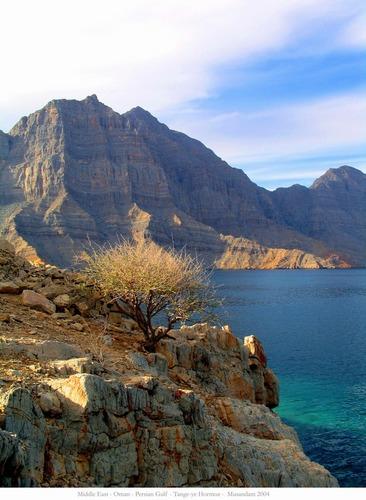 Musandam - Die Spitze der Arabischen Halbinsel