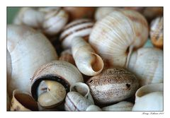 Muschel und Schnecken Sammlung
