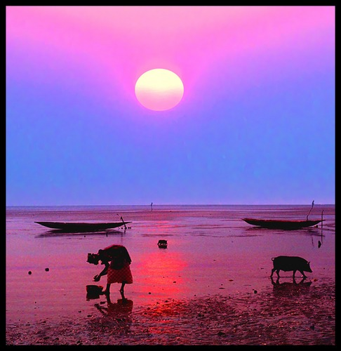 Muschelernte im Abendlicht - Westafrika