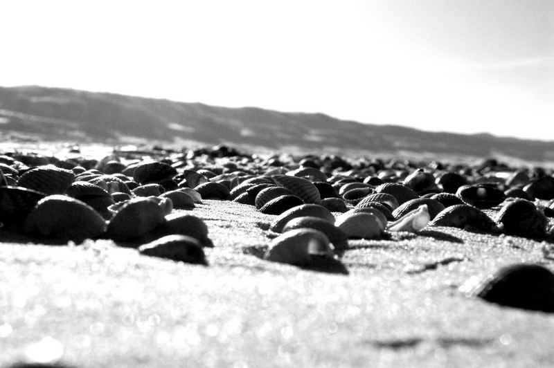 Muschelfriedhof am Strand