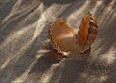 Muscheliges im warmen Sand.