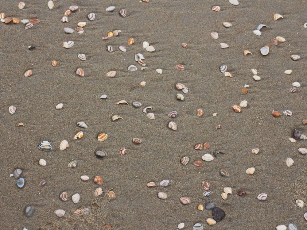 Muscheln am Nordseestrand