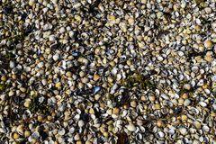 Muscheln an der Nordsee