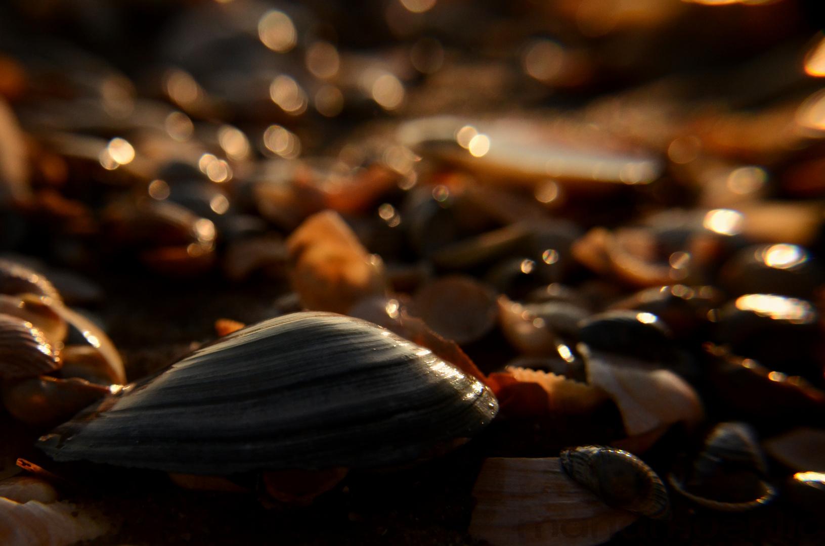 Muscheln an der Ostsee im Januar