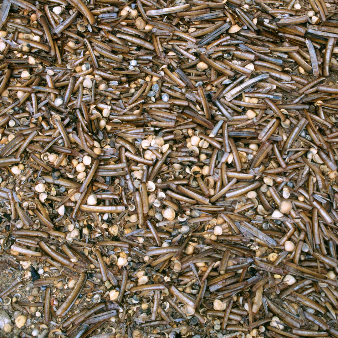 Muscheln - natürliche Strukturen (15)