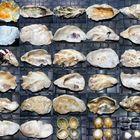 Muscheln und gemeine Napfschnecken (innen und außen)