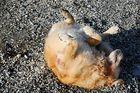 Muschelpeeling für Hunde auf Rügen