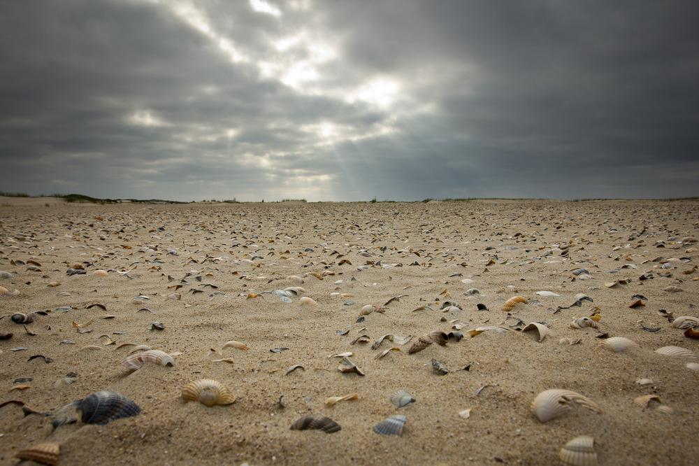 Muschelsand - Norderney von Serfotocom