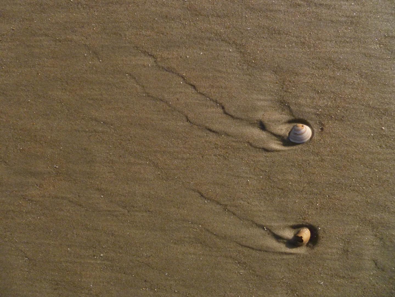Muschelspuren