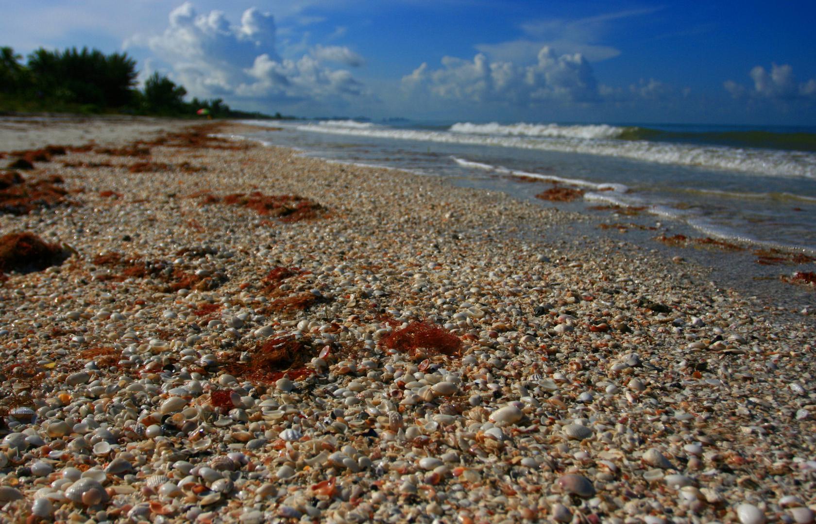 Muschelstrand Florida