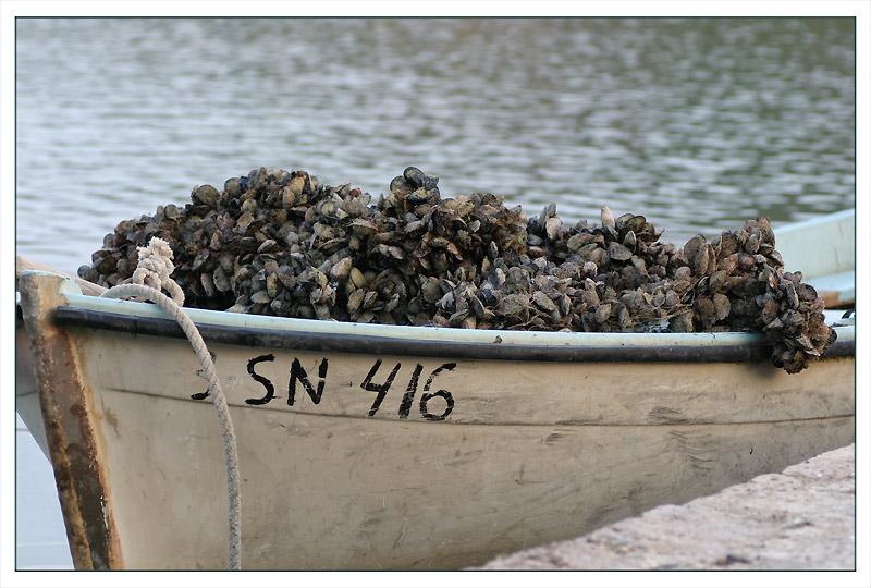 Muschelzucht auf der Insel Peljesac