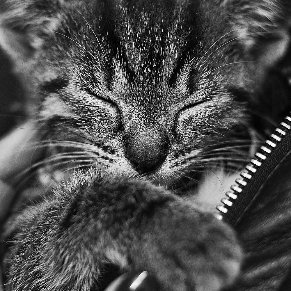 Muschi Foto & Bild | tiere, haustiere, katzen Bilder auf