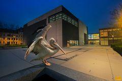 Musealer Vogel