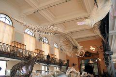 Musée et Institut océanographique